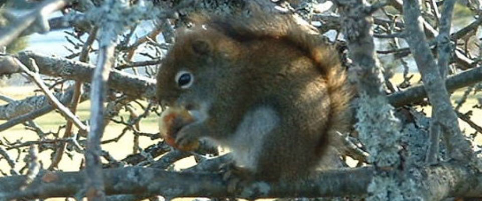 Image of squirrel in tree